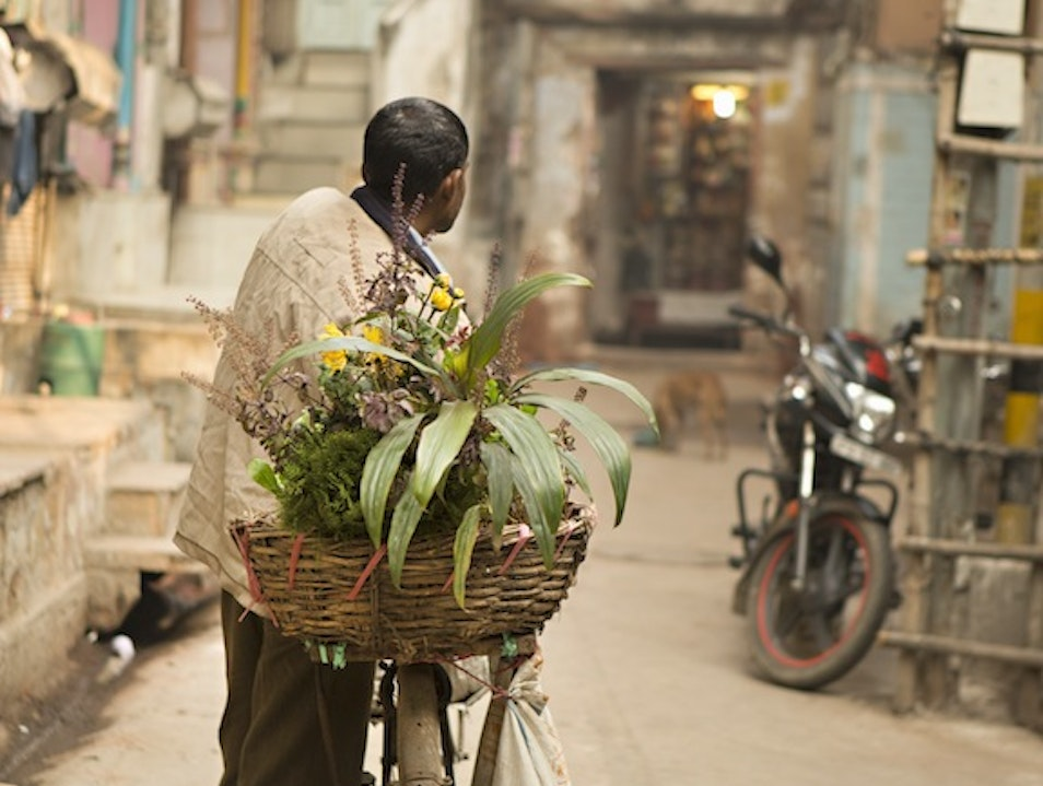 Orchid Delivery New Delhi  India