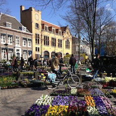 Plant and Flower Market