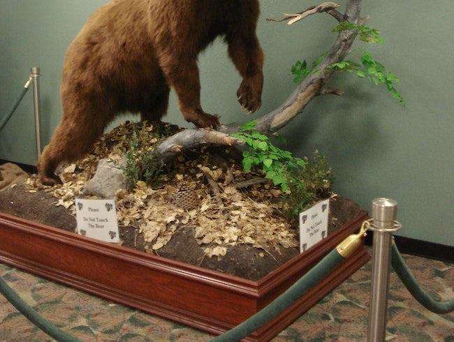 A Beary Pleasant Airport