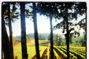 Vista Hills Vineyard