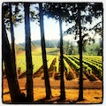 Vista Hills Vineyard Dayton Oregon United States