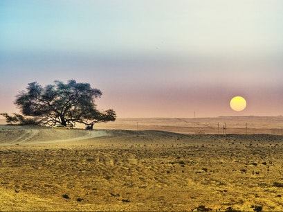 Tree of Life Southern Governorate  Bahrain
