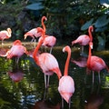Flamingo Gardens Davie Florida United States