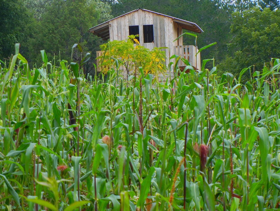 Cozy house in the middle of a cornfield
