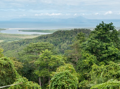 Daintree Rainforest Diwan  Australia