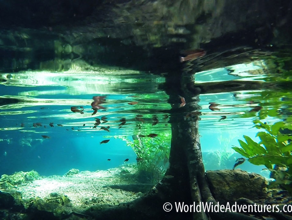 Snorkelling with Stalatites and Turtles!