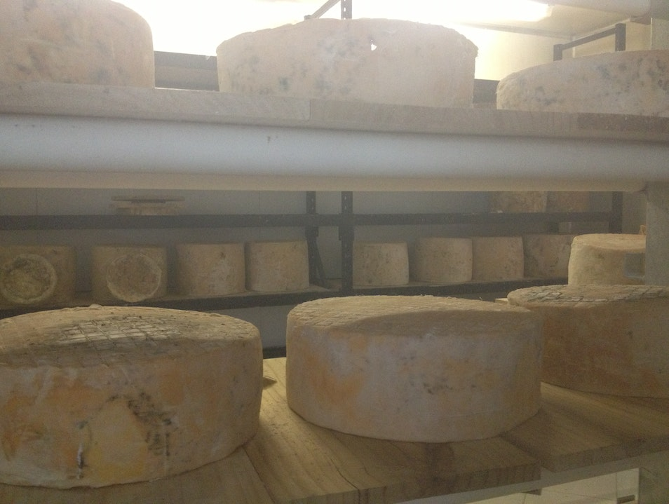 Cheese tasting at Witches Chase Cheese