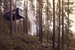 Treehotel Sweden Elevates the Eco-Hotel Experience Boden N  Sweden