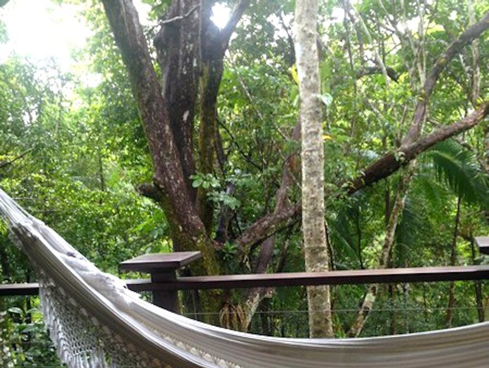 The Hotel in the Middle of the Daintree Rainforest  Mossman  Australia