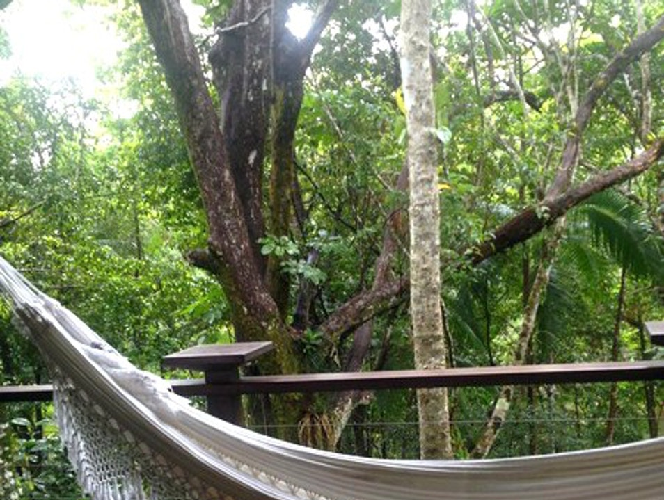 The Hotel in the Middle of the Daintree Rainforest  Finlayvale  Australia