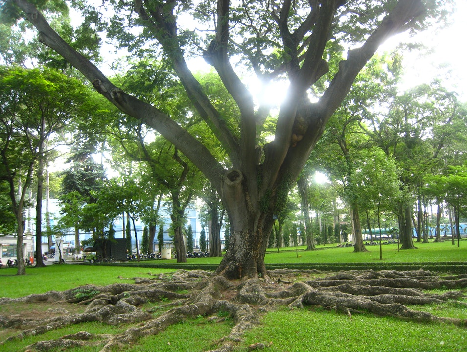 The Reunification Tree Ho Chi Minh City  Vietnam