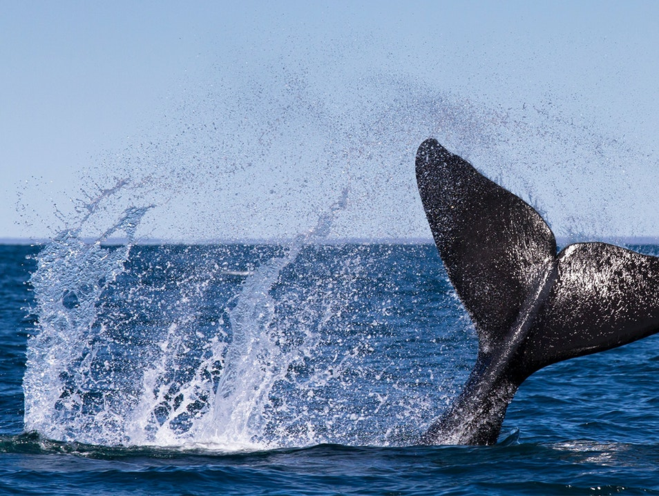 Whale-Watching Puerto Madryn  Argentina