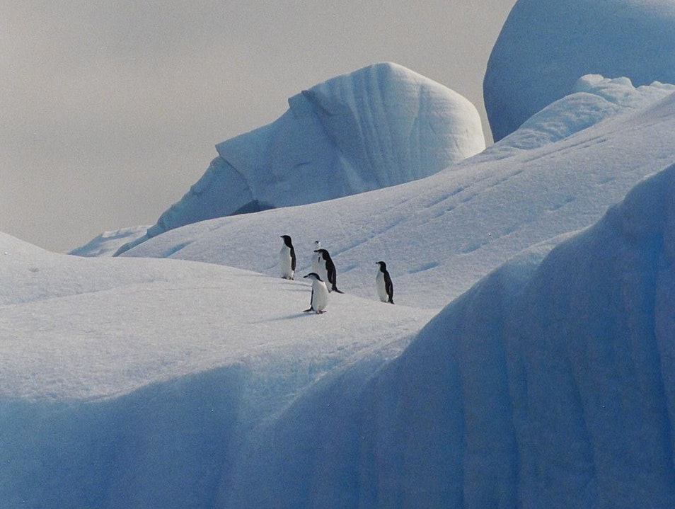 March of the Penguins   Antarctica
