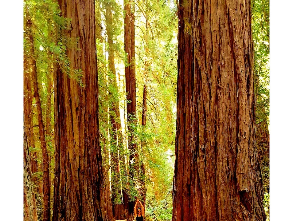 Sequoias  Mill Valley California United States