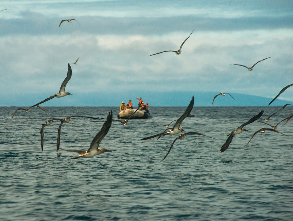 Enter the Feeding Frenzy   Ecuador