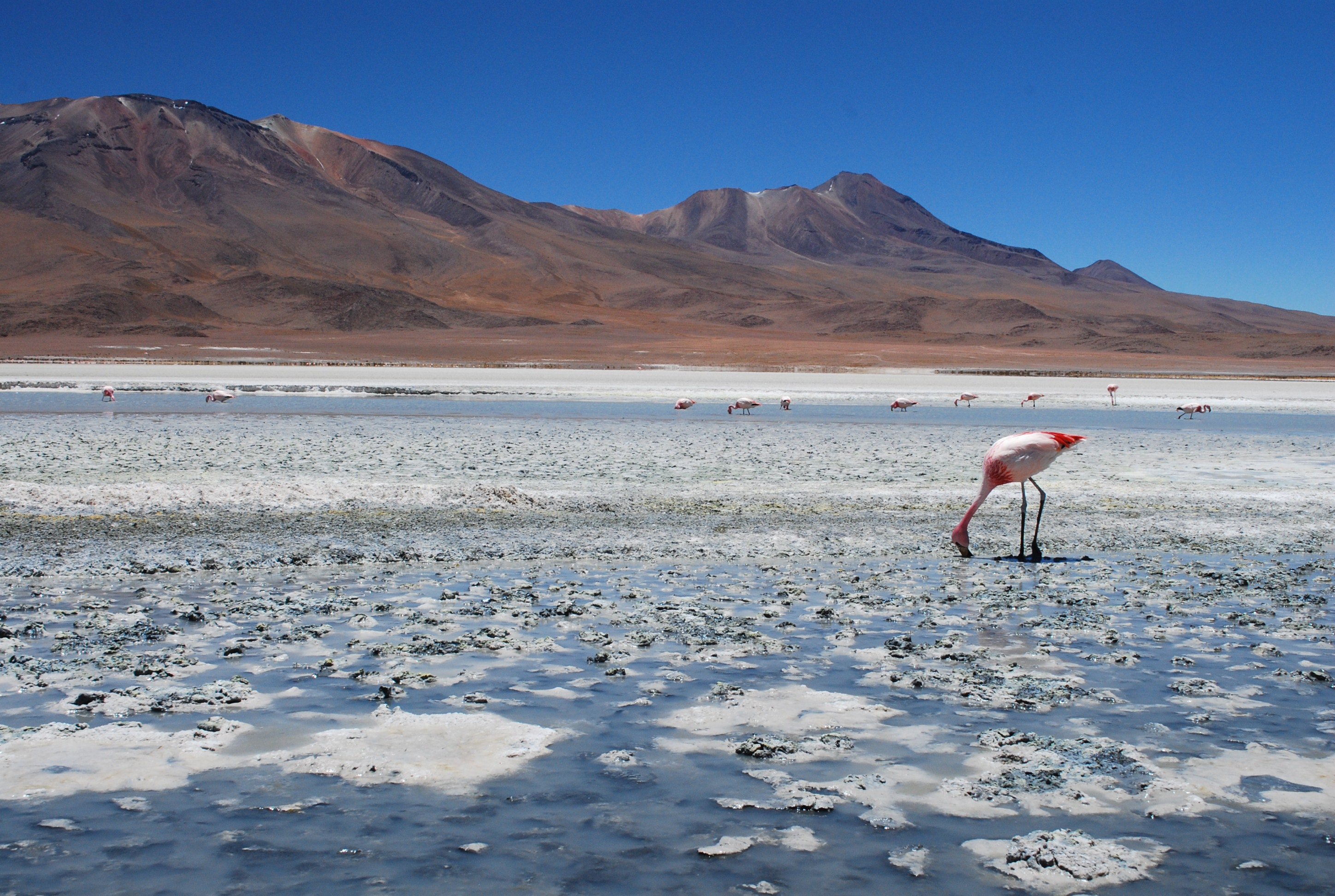 uyuni asian personals Price poised to pounce after super rally stage the 498km competitive section from the uyuni salt flats to tupiza was matildas confirm pre-asian cup.