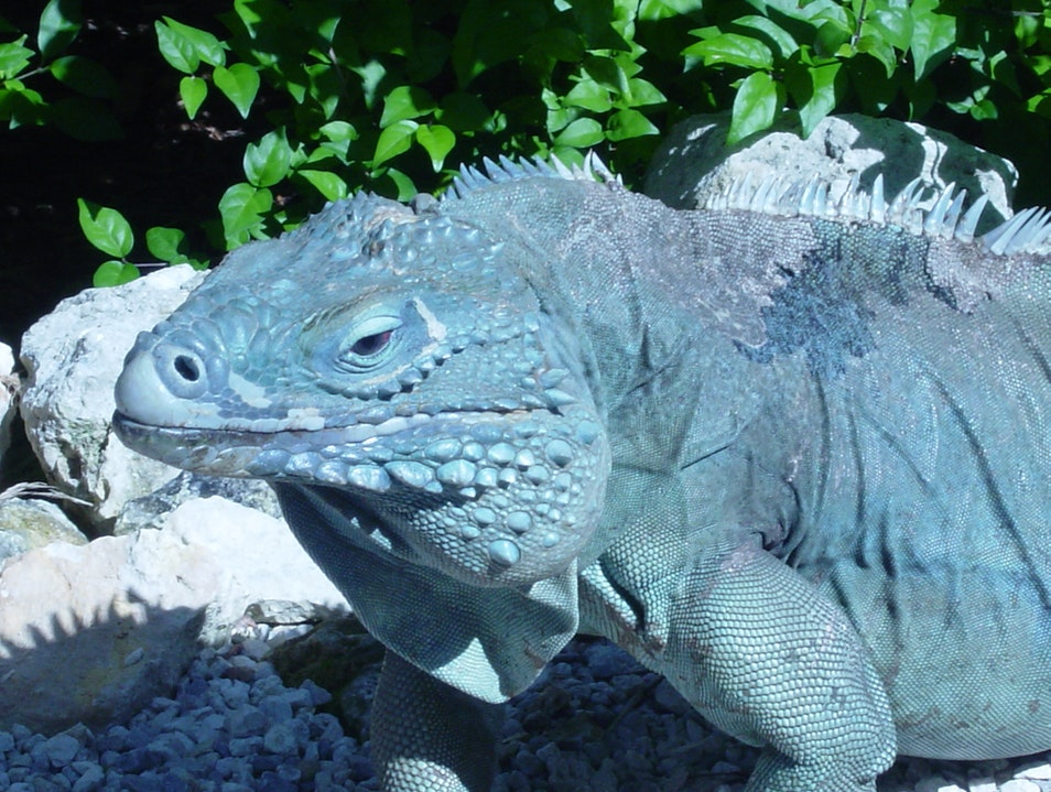 QE II Botanic Park + Blue Iguana Recovery Programme North Side  Cayman Islands