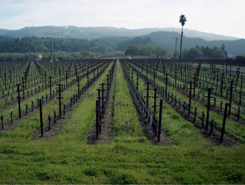 Harvest Inn Vineyard Saint Helena California United States