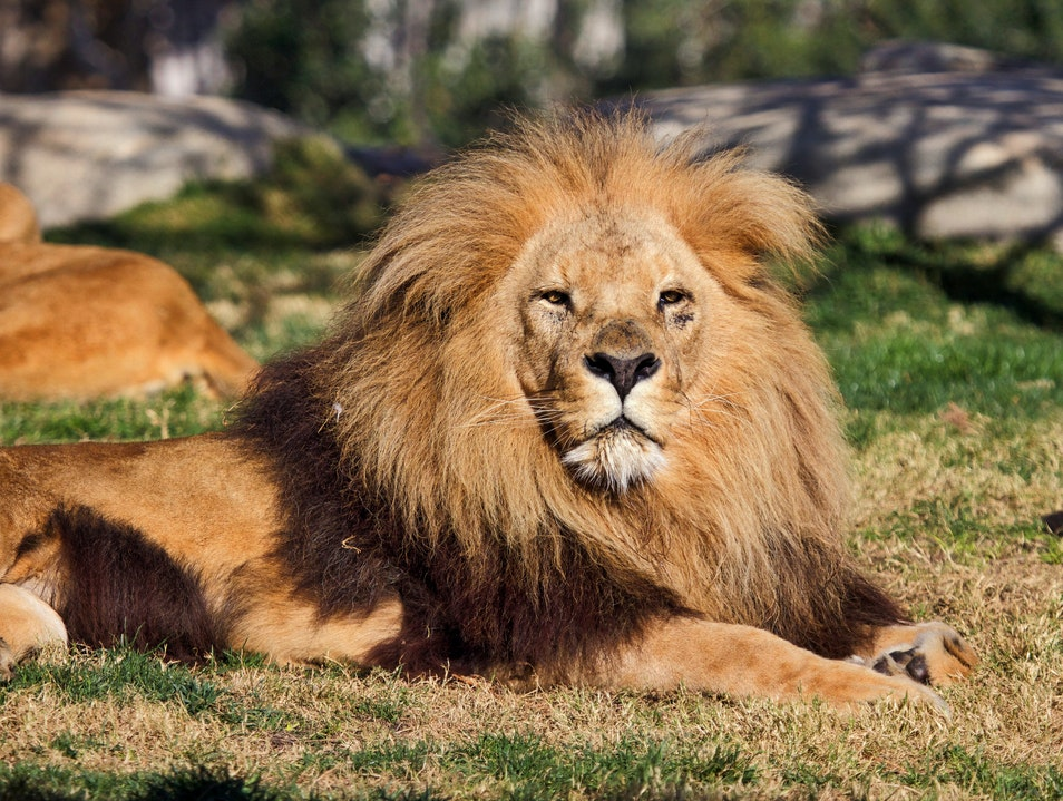 Learn about Animals at Bioparc Valencia
