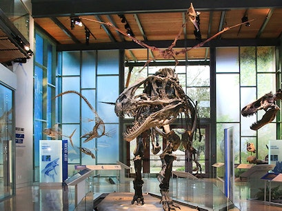 The Witte Museum San Antonio Texas United States