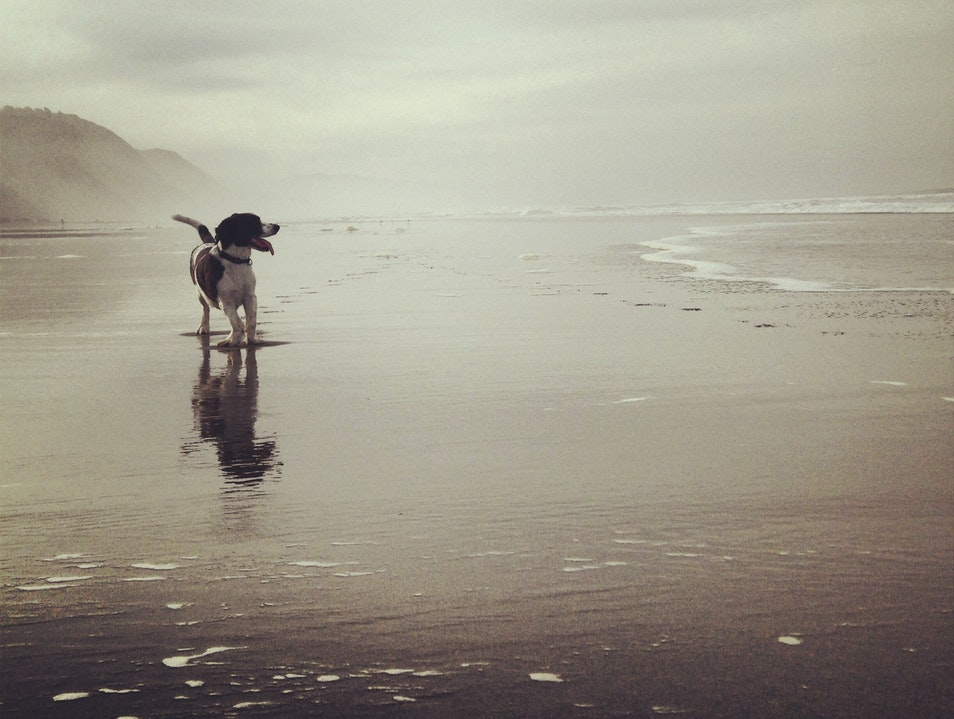 Fort Funston is For the Dogs! San Francisco California United States