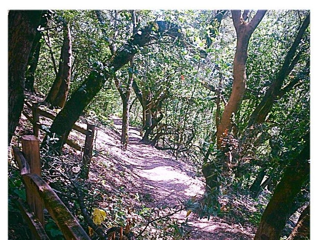 Explore the hiking trails in Oakland