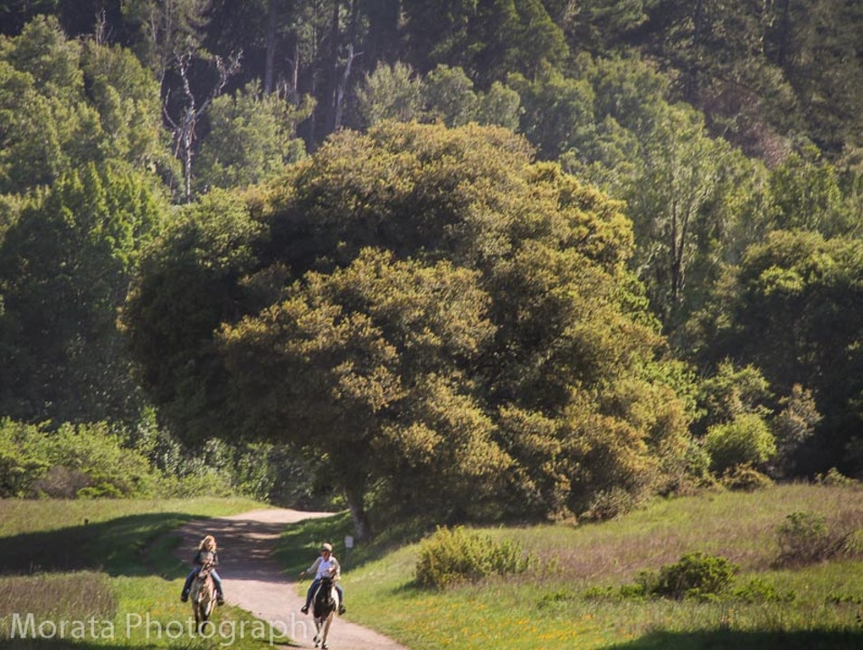 A hike through redwood forests to the ocean Point Reyes Station California United States