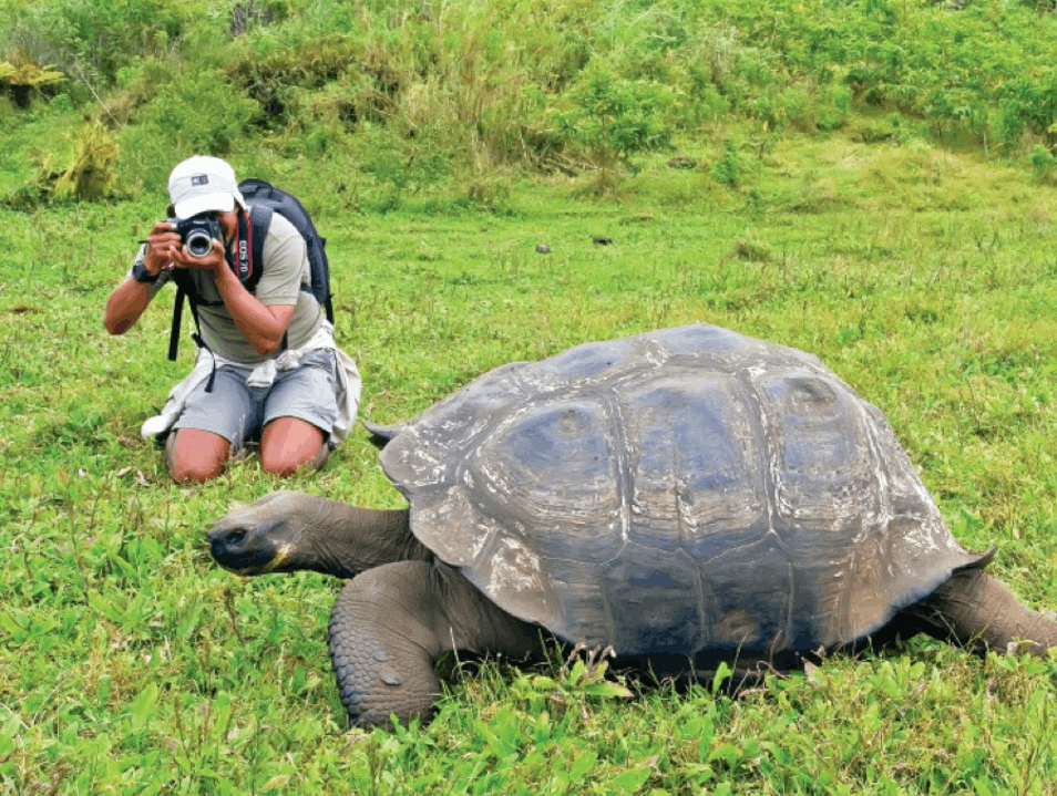 Getting to Know the Galápagos' Giant Tortoises Galápagos Islands  Ecuador