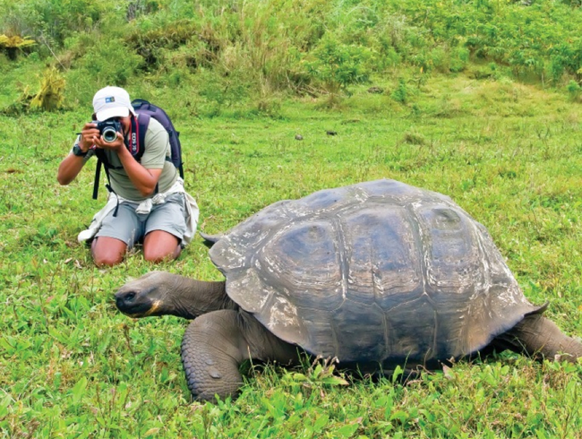 Getting to Know the Galápagos' Giant Tortoises