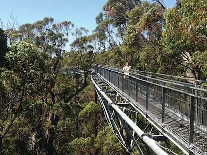 Tree Top Walk Tingledale  Australia