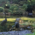 Japanese Gardens Portland Oregon United States