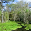 Big Cypress National Preserve Ochopee Florida United States