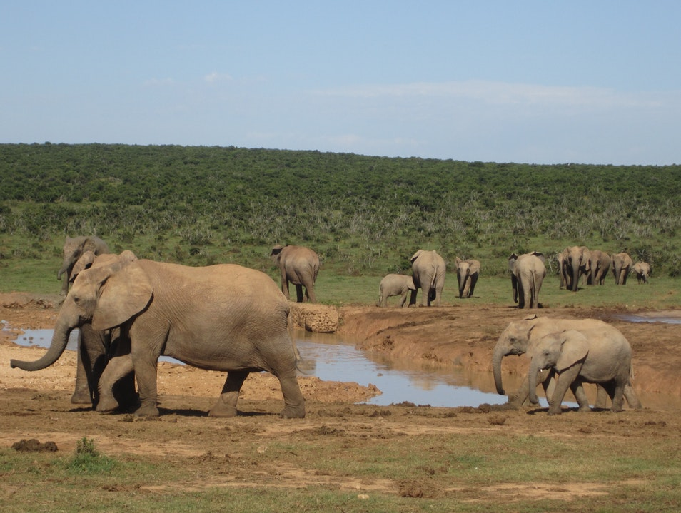 Elephant Safari Paradise Addo  South Africa