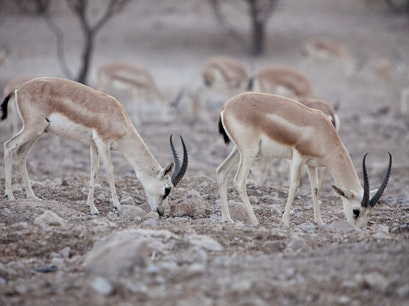 Sir Bani Yas Island Sir Baniyas  United Arab Emirates