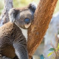 Cleland Wildlife Park Summertown  Australia