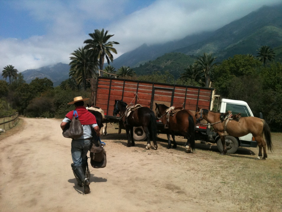 Go Horseback Riding in La Campana Park Hijuelas  Chile
