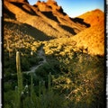 Bear Canyon, Santa Catalina Mountains Tucson Arizona United States