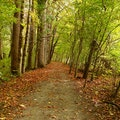 Oconaluftee River Trail Cherokee North Carolina United States