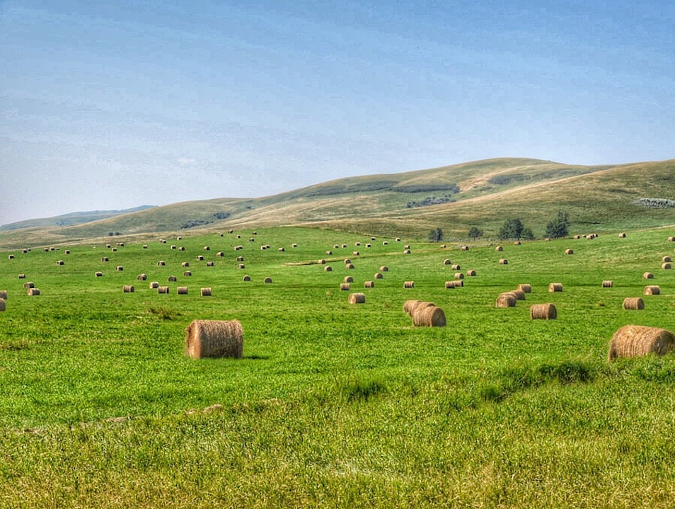 Farms and Rolling Pastures of Alberta  Sundre  Canada