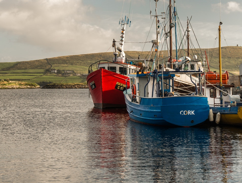 Dangle your Dingle in Dingle Harbour