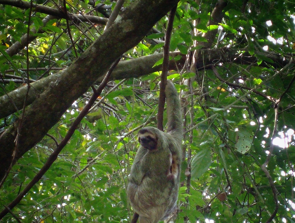 Happy sloth Manuel Antonio  Costa Rica