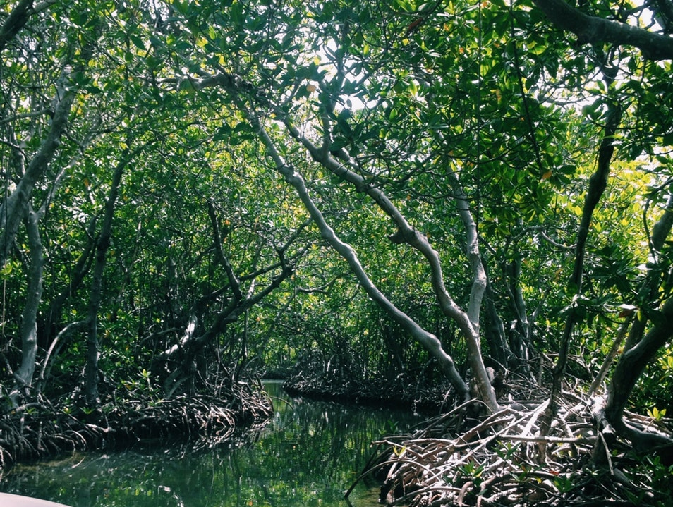 Exploring Mangrove Channels