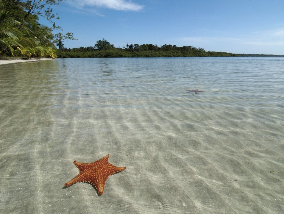 Starry Oasis Bocas Del Toro Province  Panama