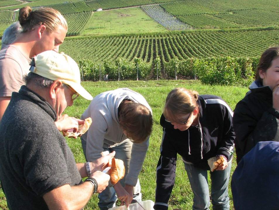 Morning Break at the Champagne Harvest - With Wine, of Course Hautvillers  France