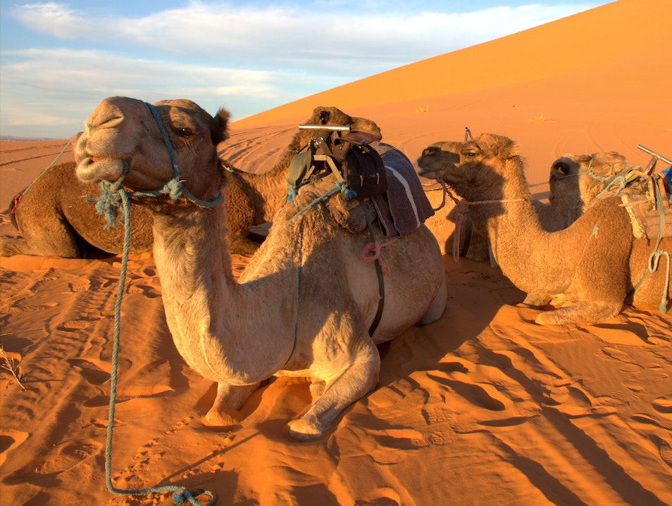 Camel ride in the Sahara - Cliché? No. Iconic? Yes.