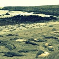 Friends of the Elephant Seal San Simeon California United States