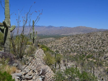 Saguaro National Park Tucson Arizona United States