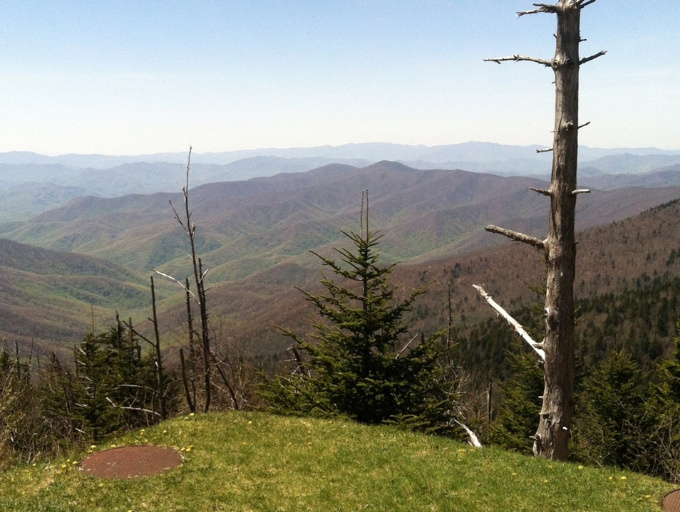 Near Clingmon's Dome Gatlinburg Tennessee United States