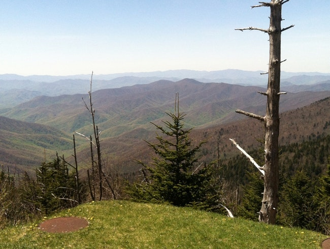 Near Clingmon's Dome