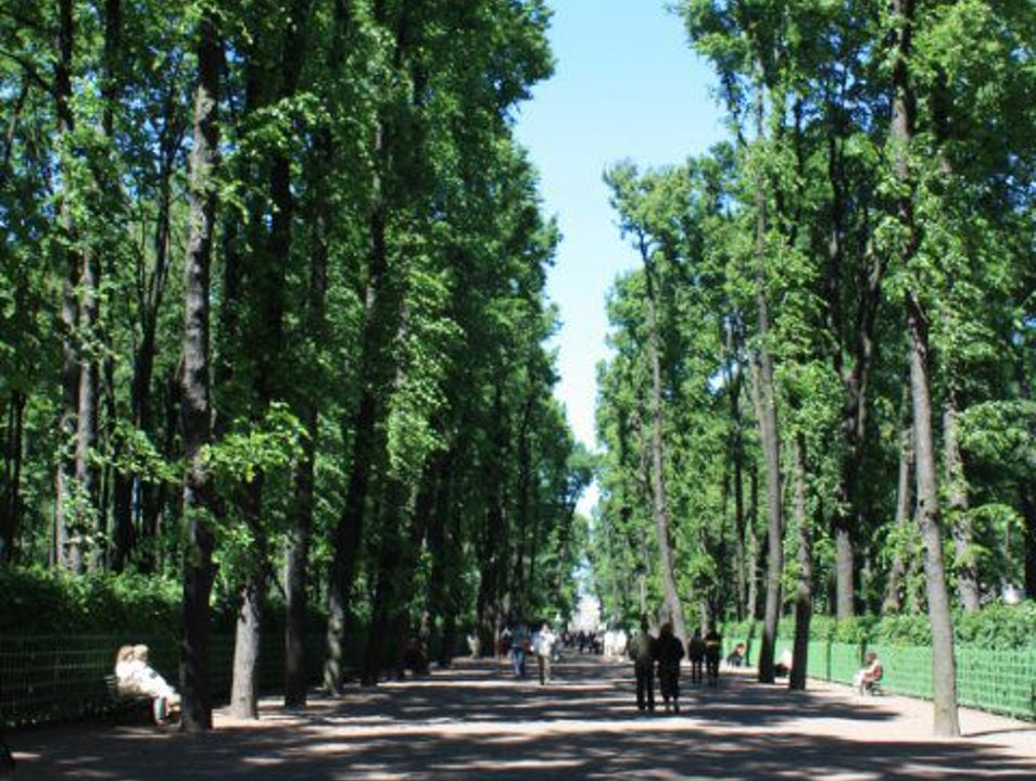 Trees that have been around since Catherine the Great. Saint Petersburg  Russia